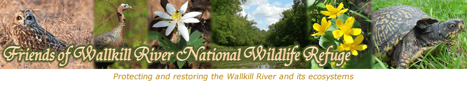 Friends of Wallkill River National Wildlife Refuge